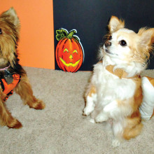 These cuties participated in a past Halloween Pet Parade!