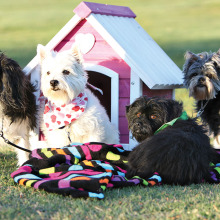 Don't miss the annual adoption event on November 8!