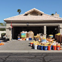 This is what 20,000 pounds of citrus looks like!