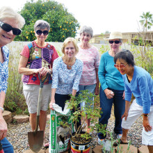 Members of the Sun Lakes Garden Club work on the Chapel garden.