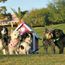 Older pups make great companions!