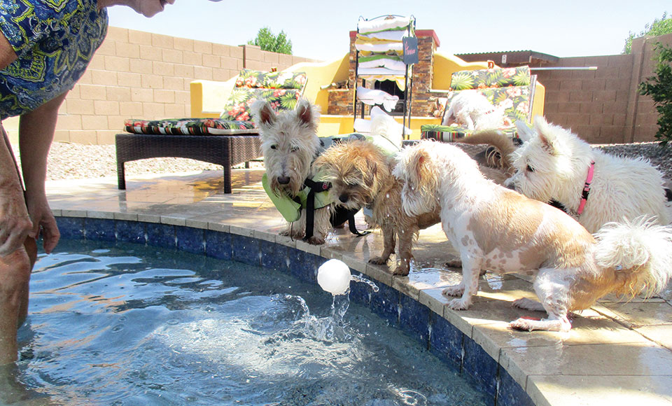 Rover's swimming with the kids