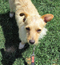The little hottie this month is Freddie - personality and energy plus! He is a very good boy and loves to walk! Ask for more information at 480-600-2828.