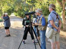 Birding in the Gilbert/Chandler area.